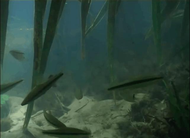 Am schwarzen Fluss - Eine spannende Fischfangexpedition zum Rio Negro kurzzeitig kostenlos 2