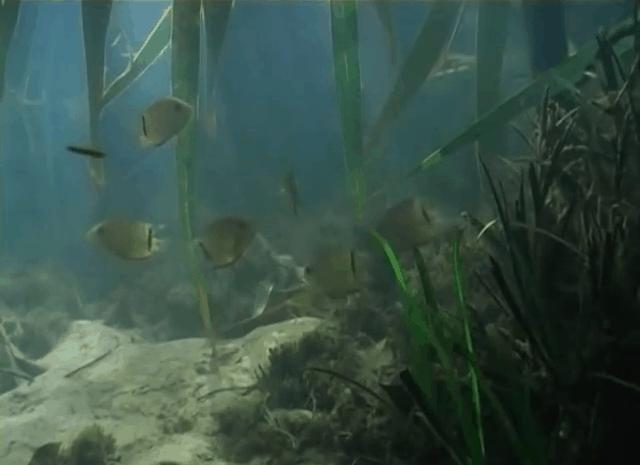 Am schwarzen Fluss - Eine spannende Fischfangexpedition zum Rio Negro kurzzeitig kostenlos 4