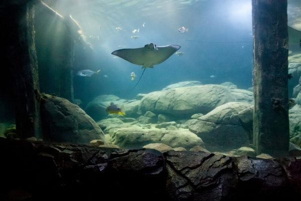 Foto: Adlerrochen. Burgers Zoo