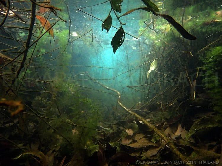 Einblicke in die Unterwasserwelt Vol.1 2