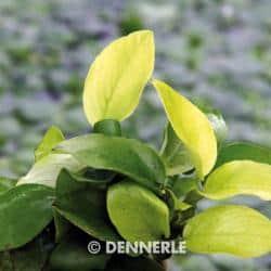 Passende Pflanzen 1