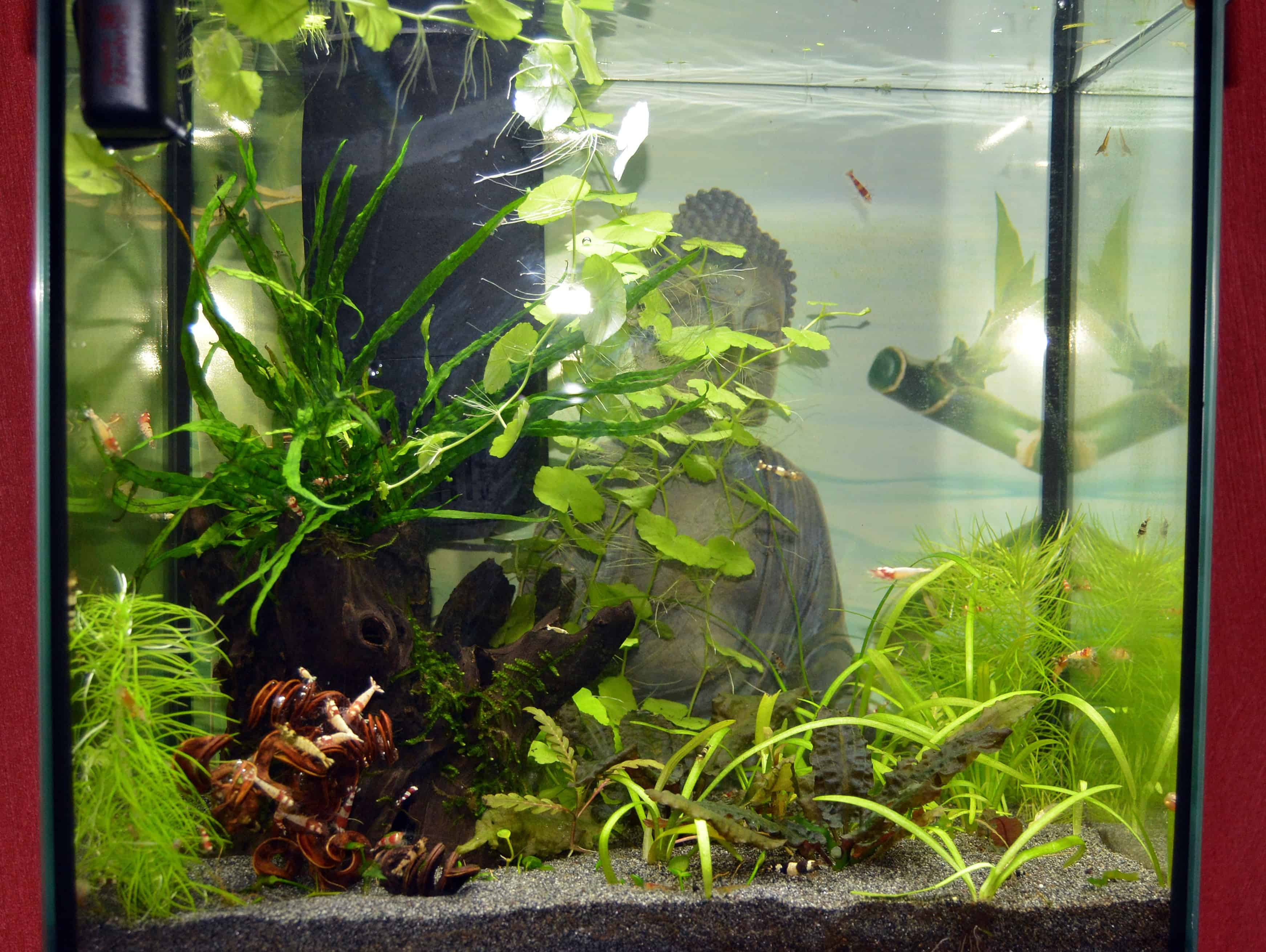 Das garnelenaquarium – die einrichtung   my fish