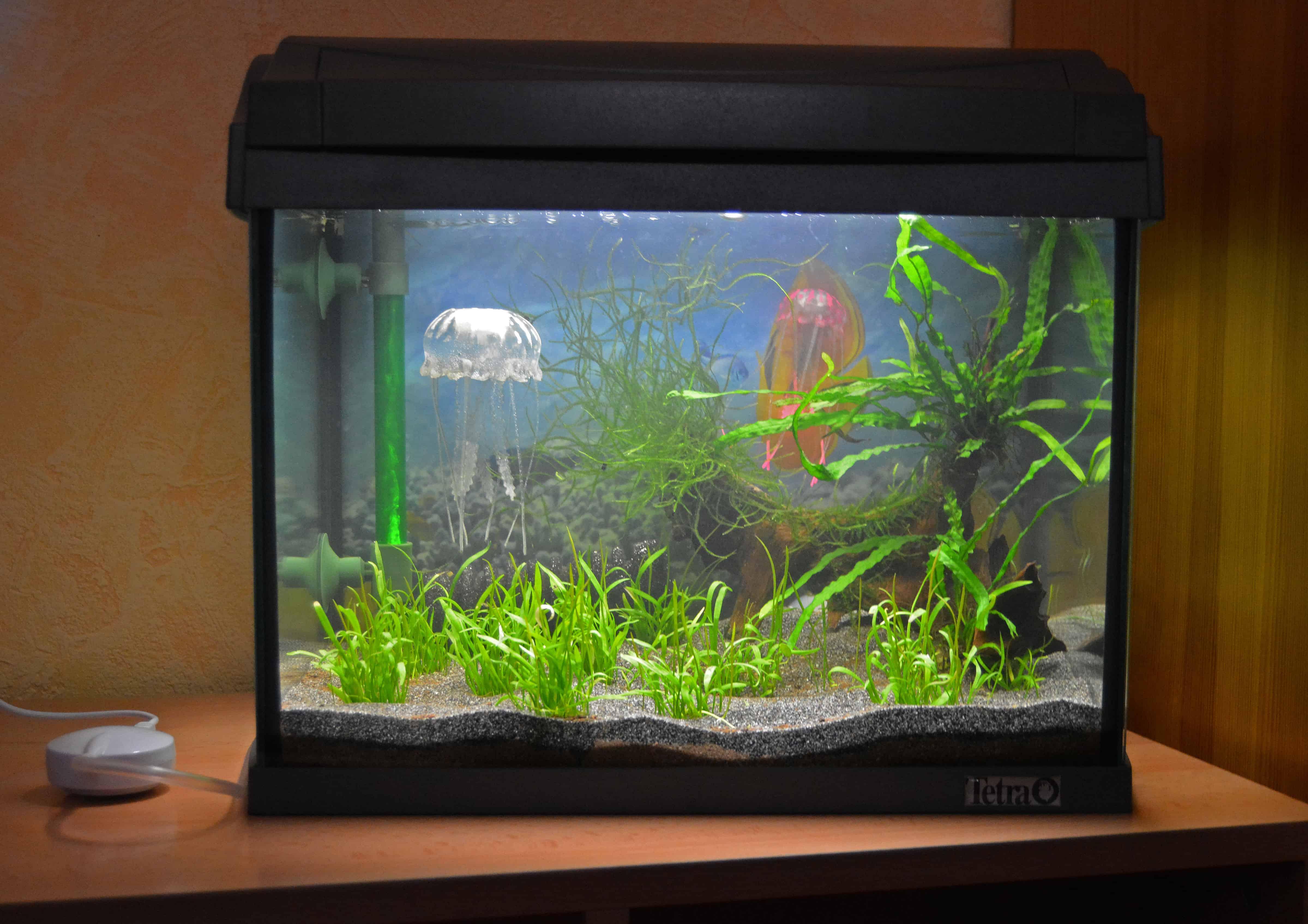 Das Garnelenaquarium – Die Einrichtung - my-fish