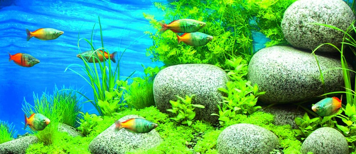vielfalt im aquarium so klappt es mit der. Black Bedroom Furniture Sets. Home Design Ideas