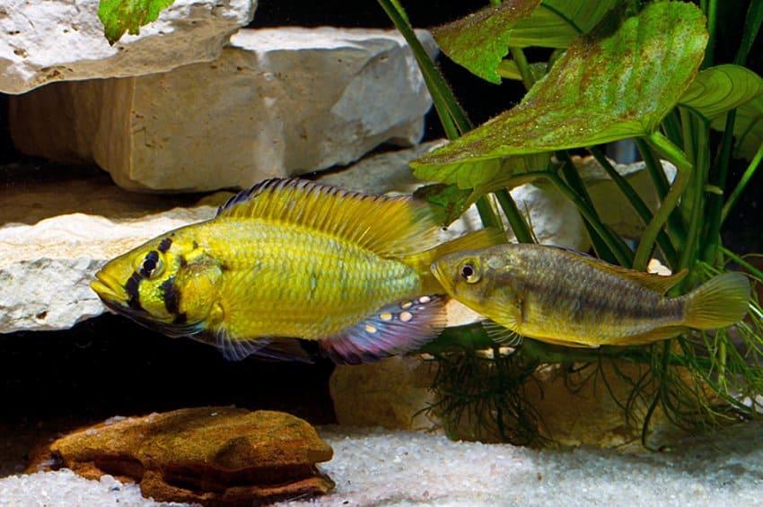 my-fish's Weblink-Empfehlungen 1-2014 1