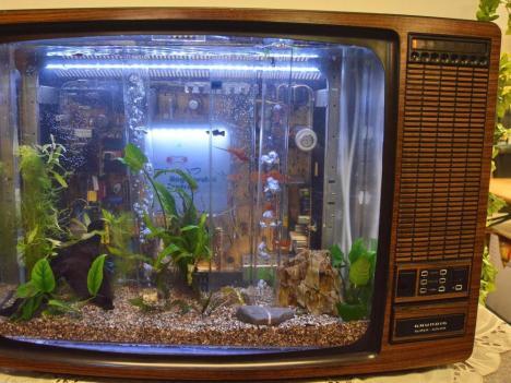 my-fish's Weblink-Empfehlungen 1-2014 4