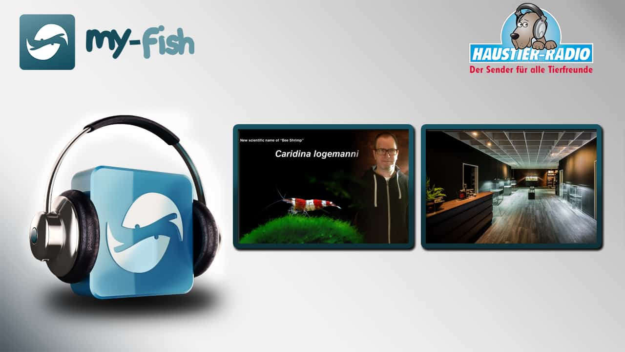 my-fish Podcast Vol. 53 mit Carsten Logemann