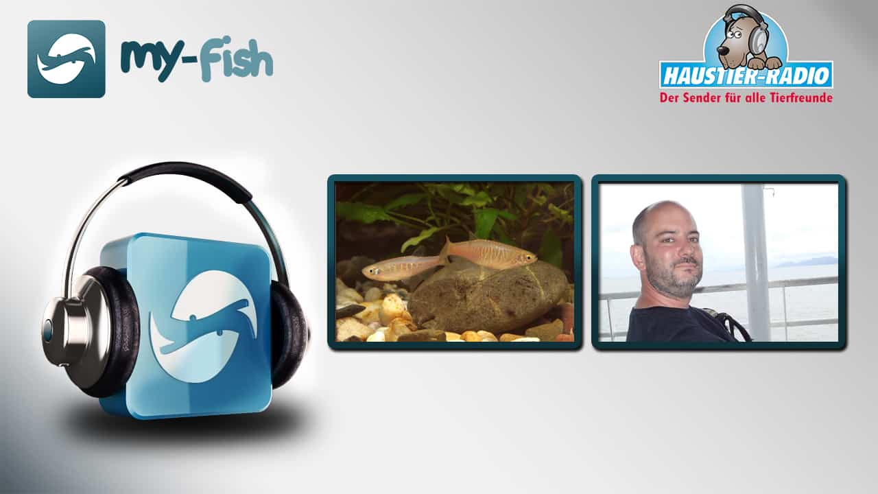 my-fish Radio