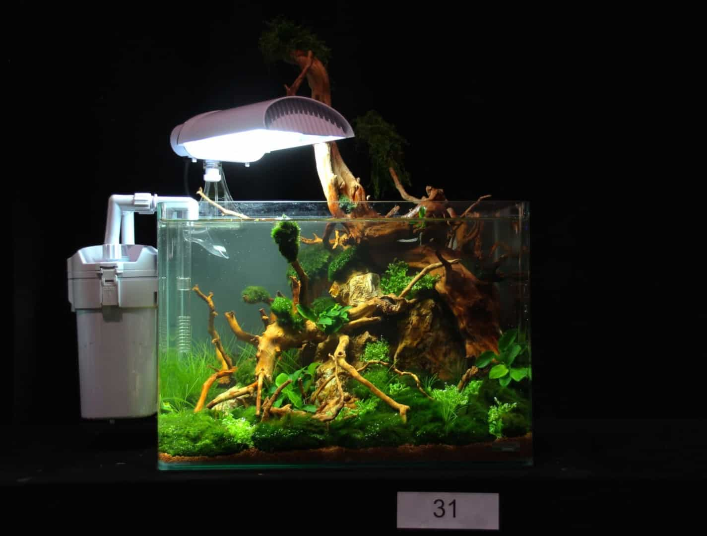 Heimtiermesse Hannover 2015 - THE ART OF THE PLANTED AQUARIUM 52