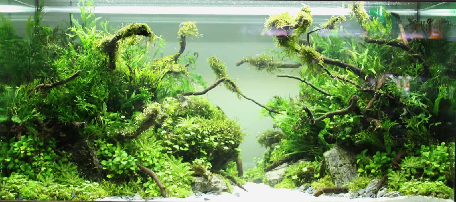 the Art of the Planted Aquarium Archive - my-fish