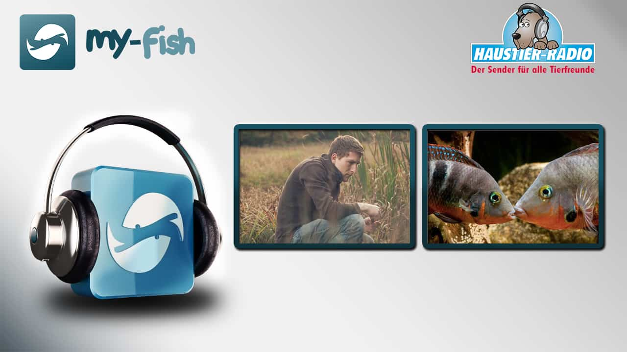 Foto: my-fish Radio