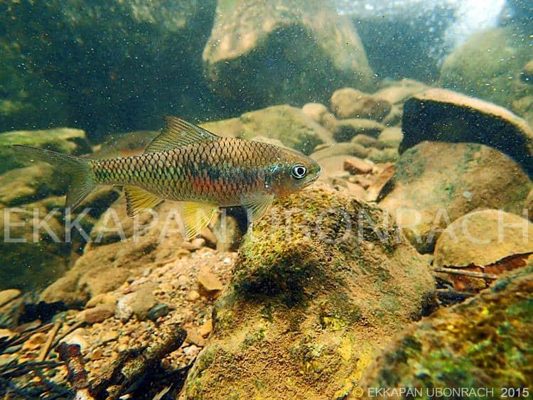Einblicke in die Unterwasserwelt Vol.2 3