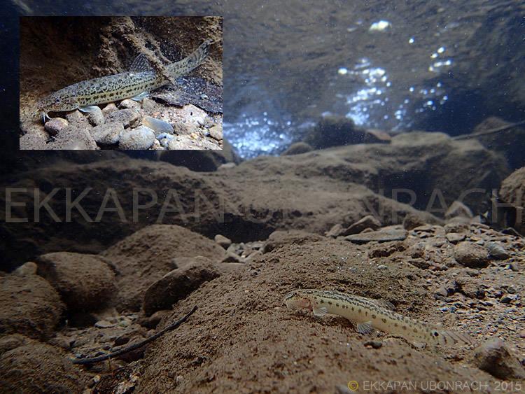 Einblicke in die Unterwasserwelt Vol.2 2