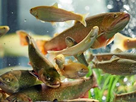 my-fish's Weblink-Empfehlungen 2-2014 3