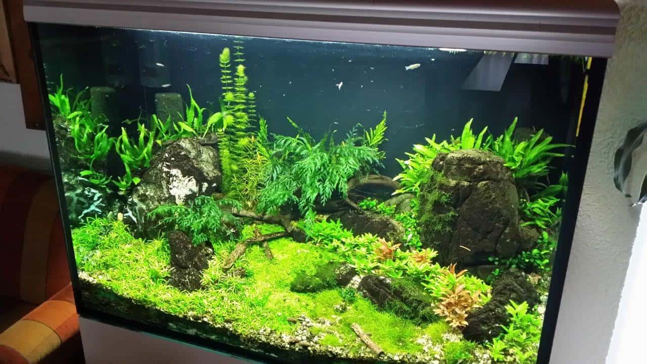 Mit my-fish zum eigenen Aquarium: Kinder des Wohnheims Kinderhüsli richten ihr erstes Becken ein 7
