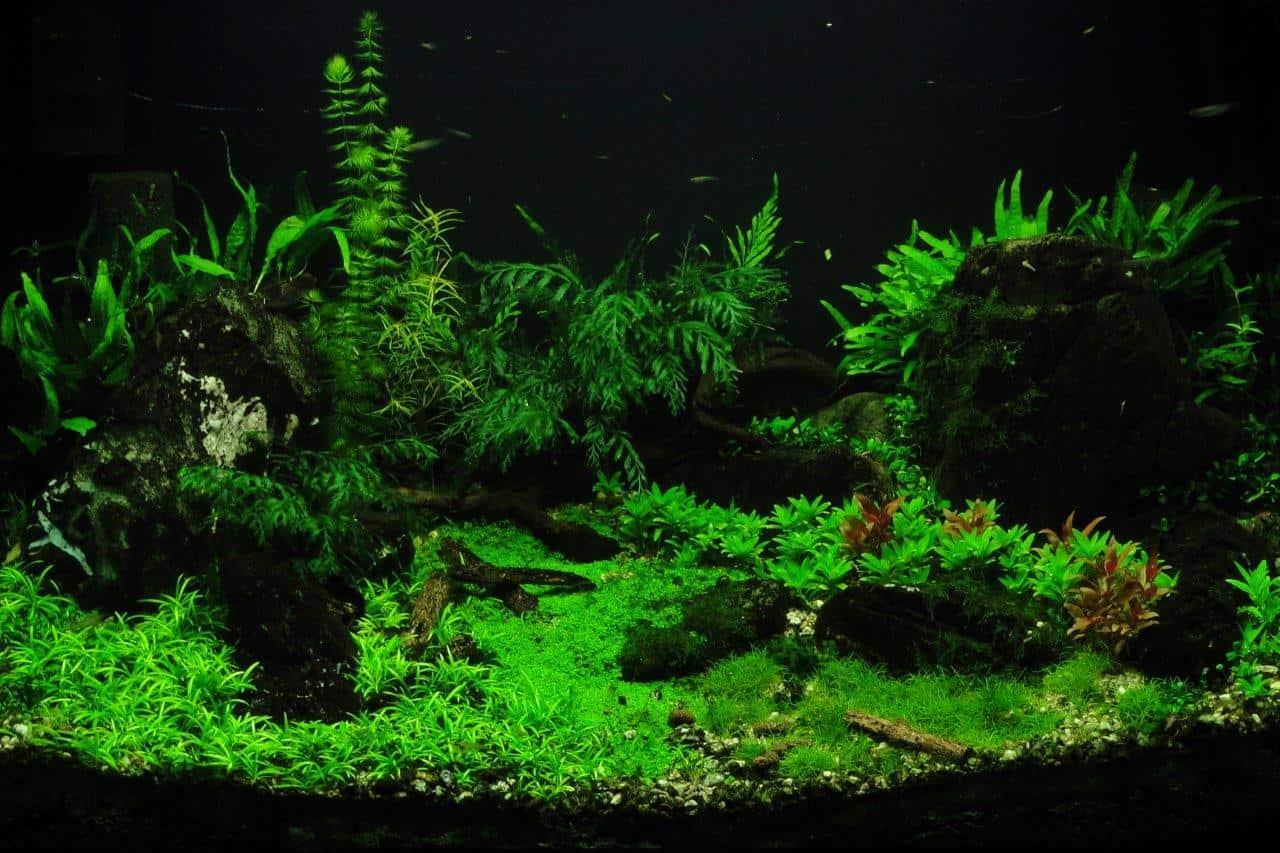 Mit my-fish zum eigenen Aquarium: Kinder des Wohnheims Kinderhüsli richten ihr erstes Becken ein 8
