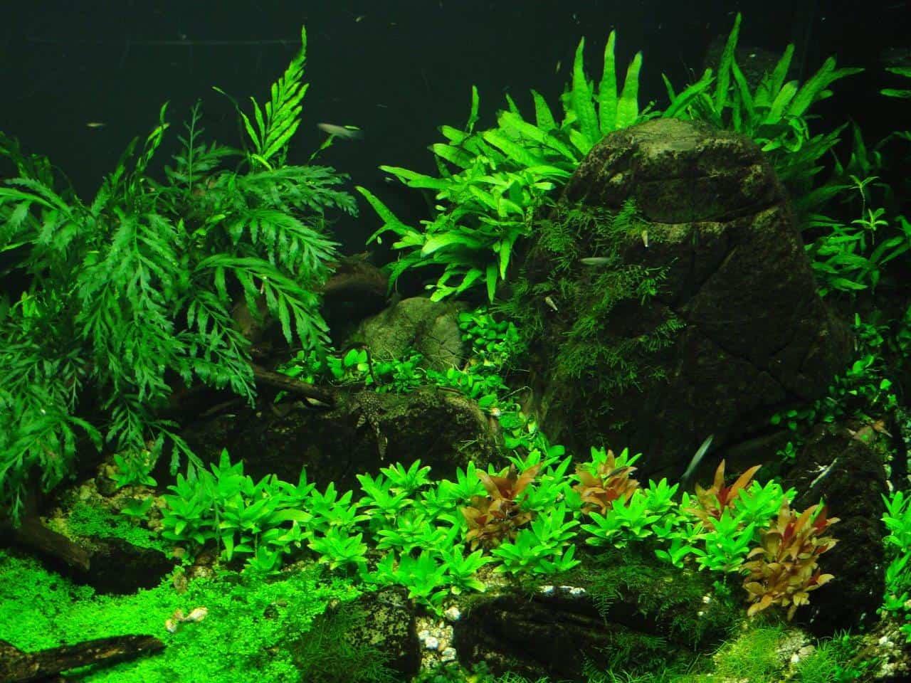 Mit my-fish zum eigenen Aquarium: Kinder des Wohnheims Kinderhüsli richten ihr erstes Becken ein 10