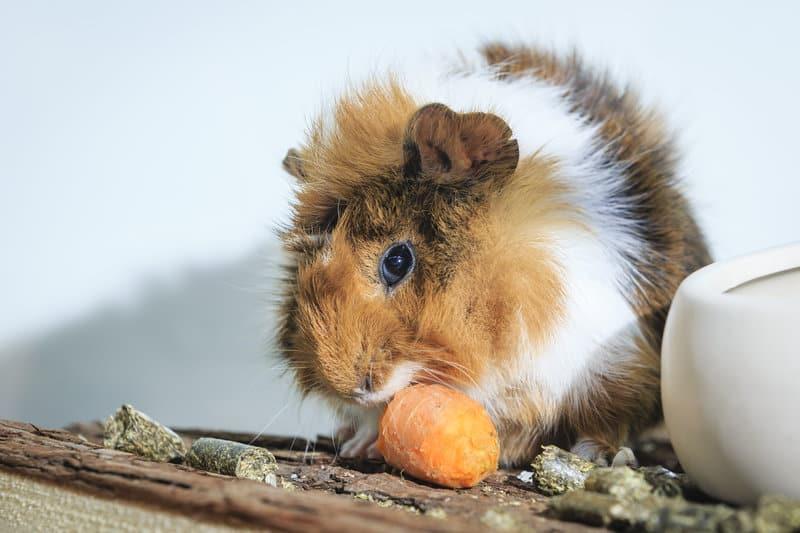 Zu einem respekt- und verantwortungsvollen Umgang mit Heimtieren gehört eine tiergerechte Unterbringung, Ernährung und Pflege der Tiere. Copyright: WZF