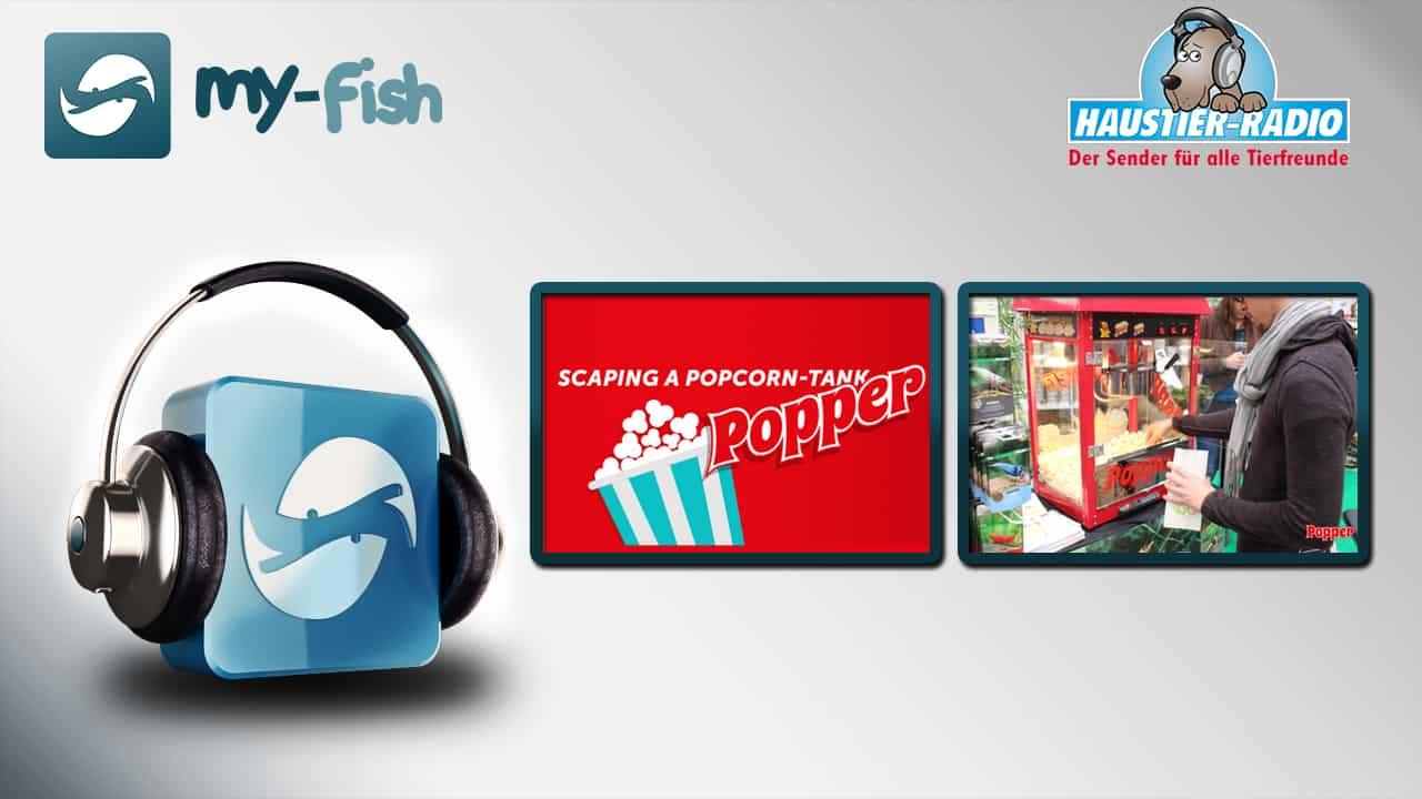 my-fish radio