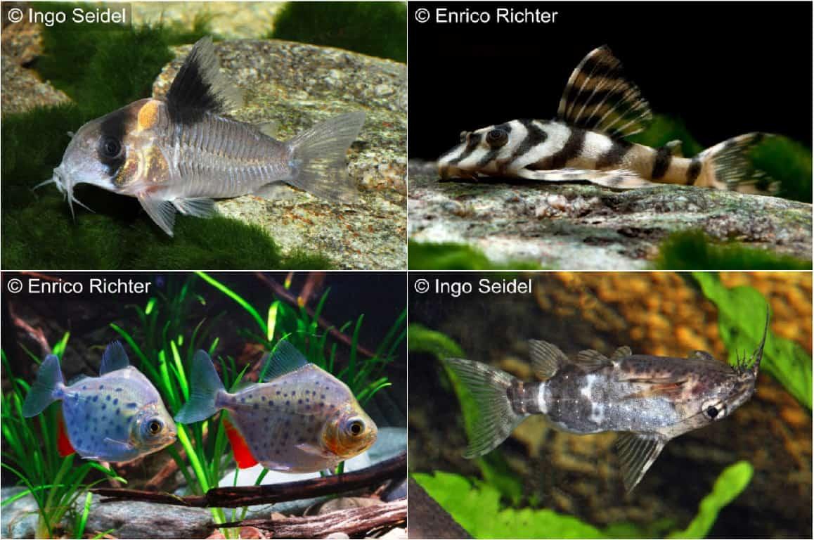 Quelle: aqua-global - Dr. Jander & Co. OHG