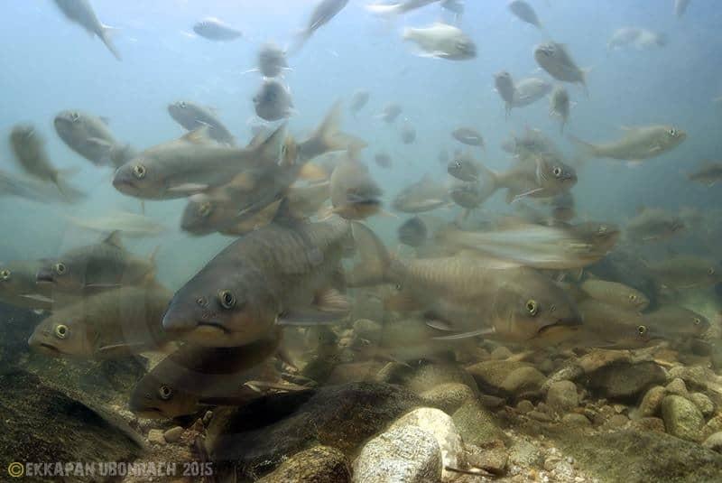 Einblicke in die Unterwasserwelt Vol.3 3