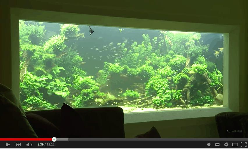Einrichtung eines 10 000 Liter Aquarium mit Andi Hofstetter
