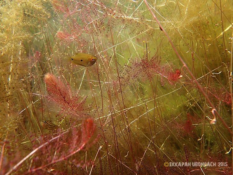 Einblicke in die Unterwasserwelt Vol.4 1