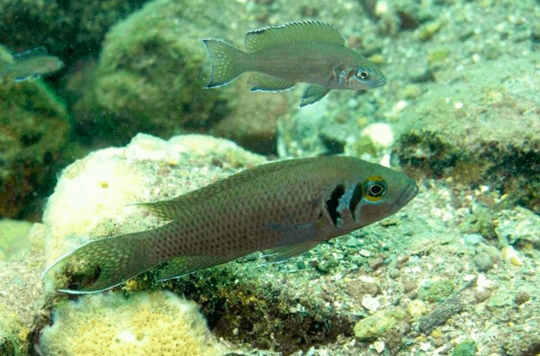 my-fish's Weblink-Empfehlungen 3-2015 2