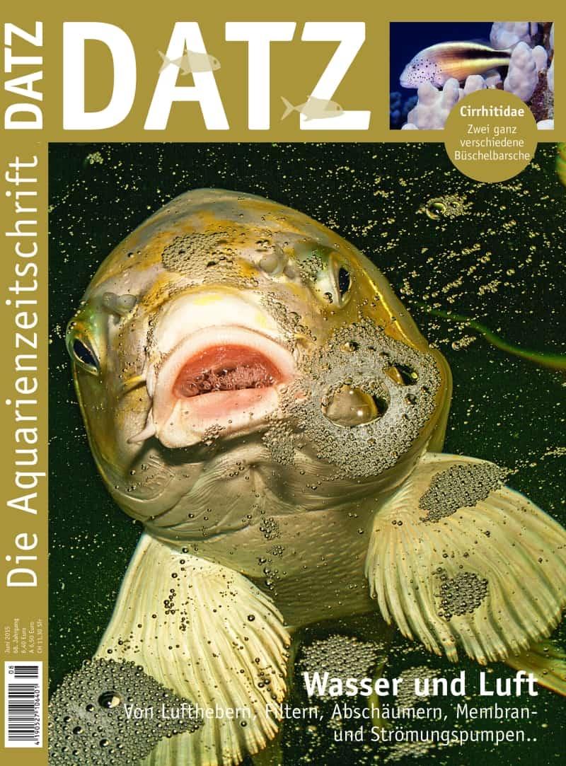 DATZ-Cover 8-2015