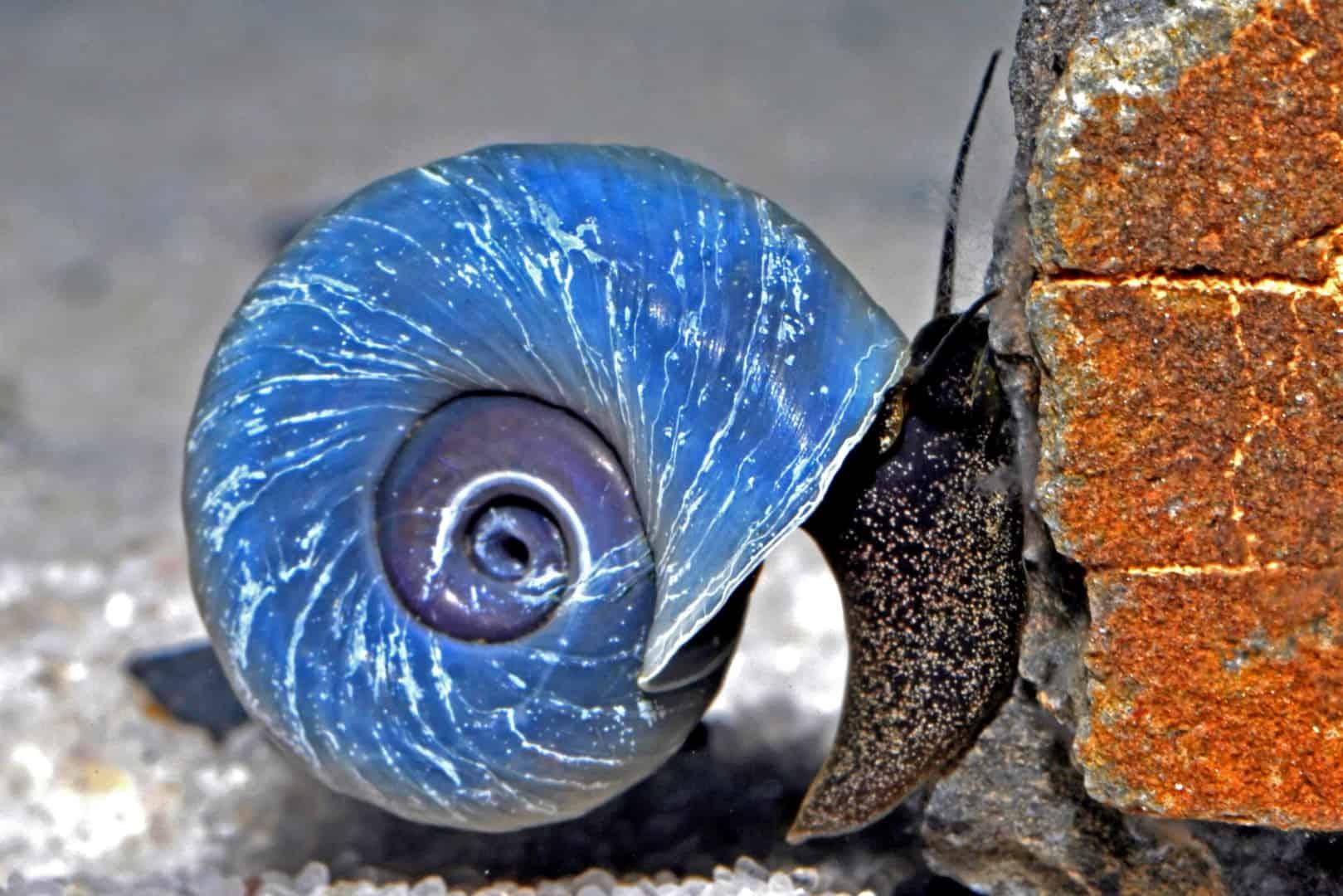 Kein Durchblick im Aquarium? Diese Putzer helfen bei Algenproblemen 3
