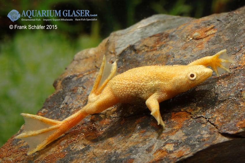 Frösche im Aquarium: Wie lassen sich Amphibien artgerecht halten? 1