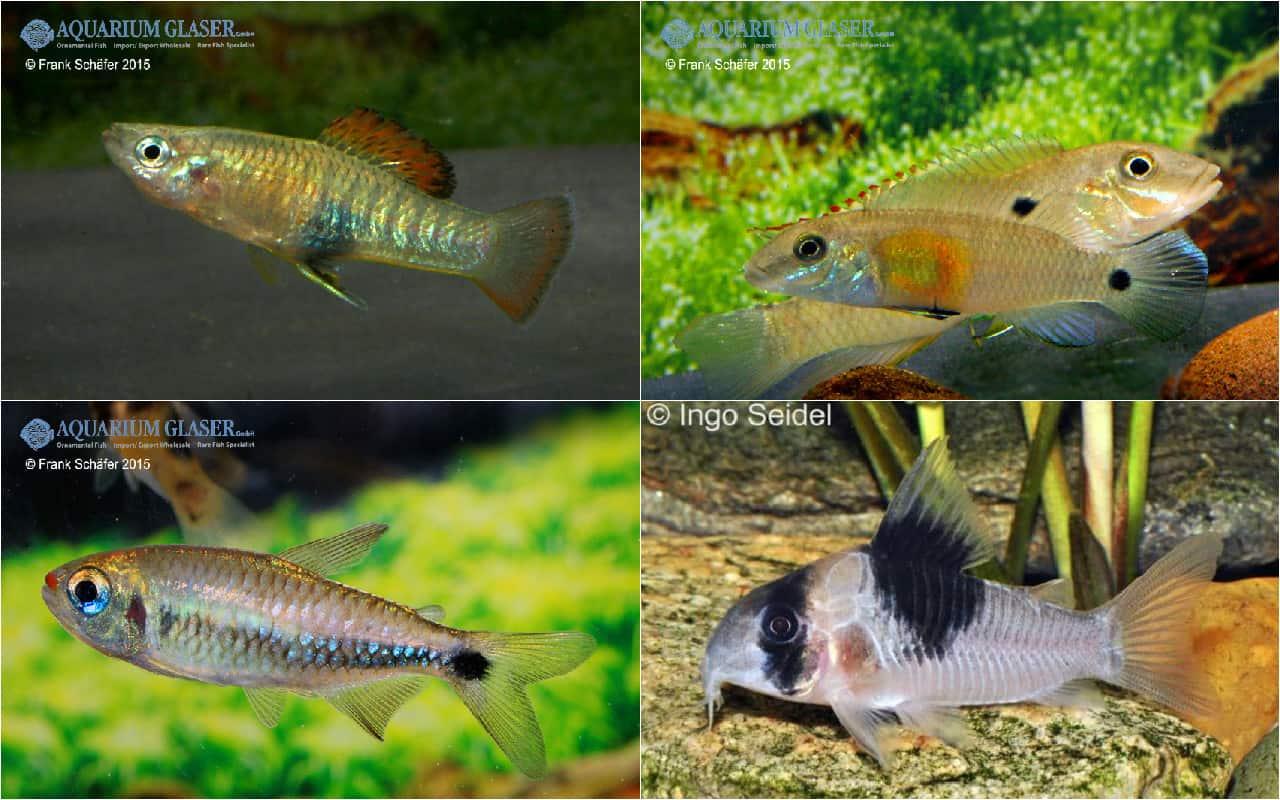 Quelle: Aquarium Glaser GmbH