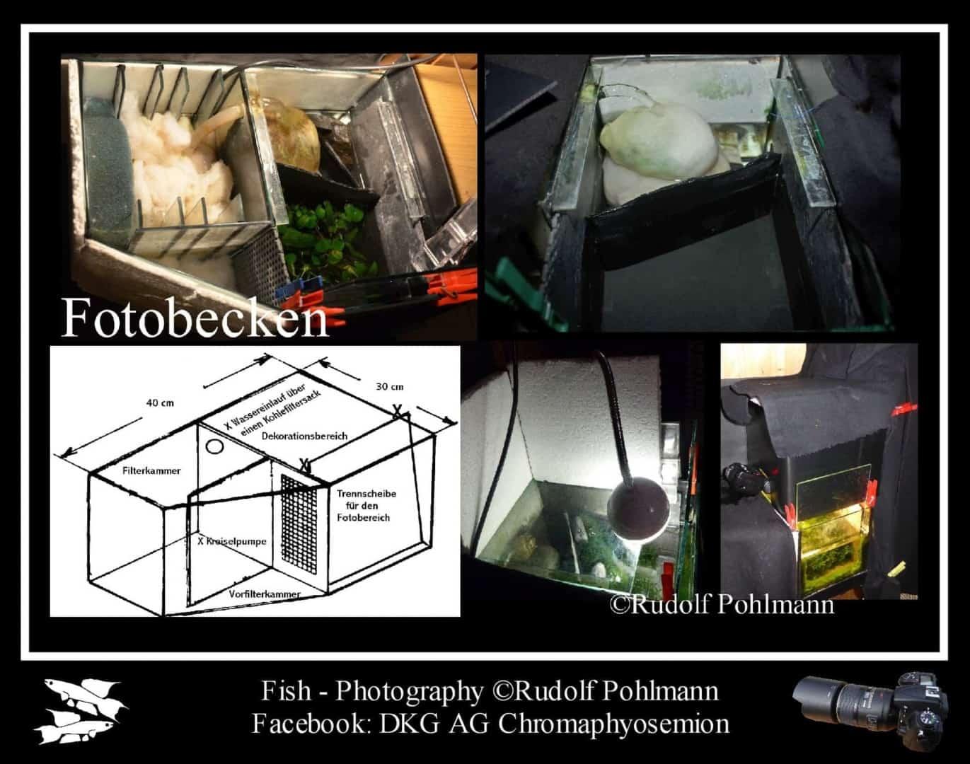 Fotostudio für kleine Fische - Das Fotobecken 1