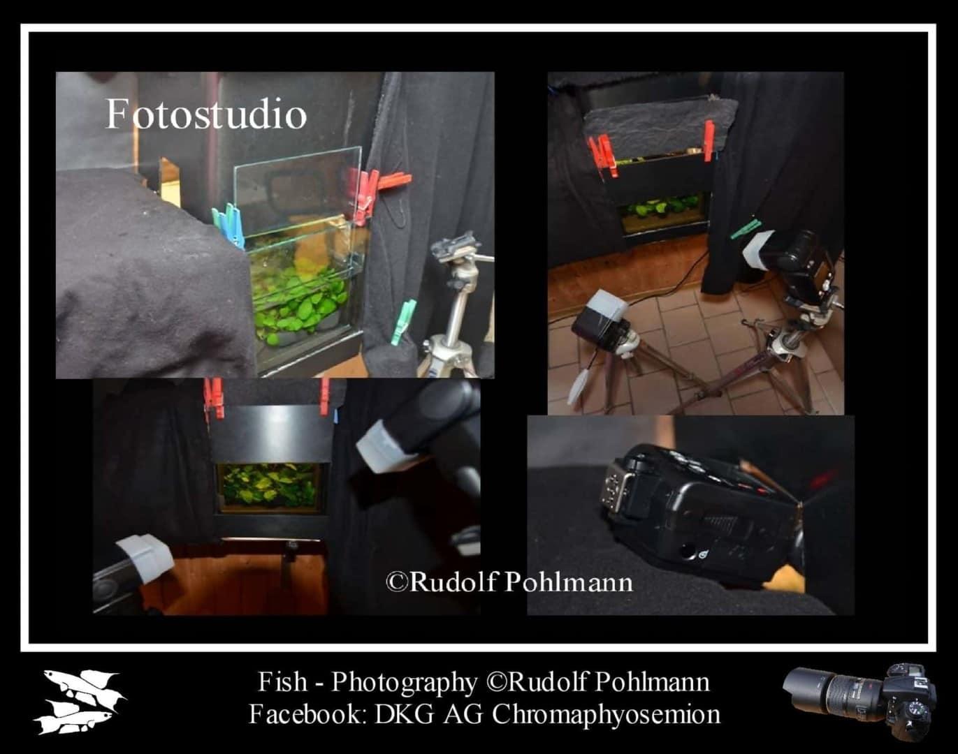 Fotostudio für kleine Fische - Das Fotobecken 2