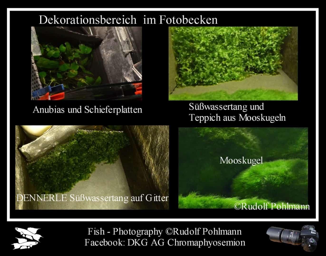 Fotostudio für kleine Fische - Das Fotobecken 3