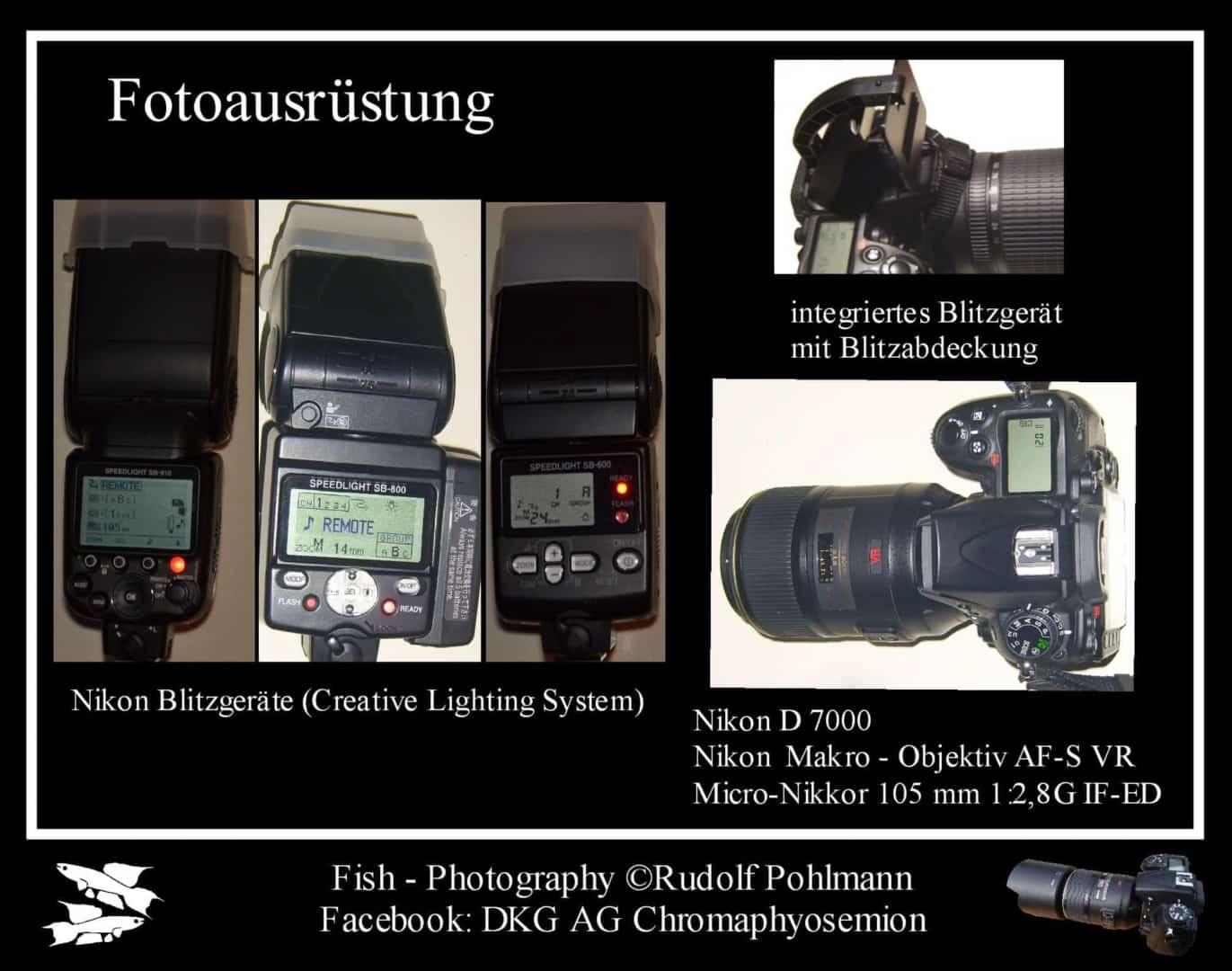 Fotostudio für kleine Fische - Das Fotobecken 5