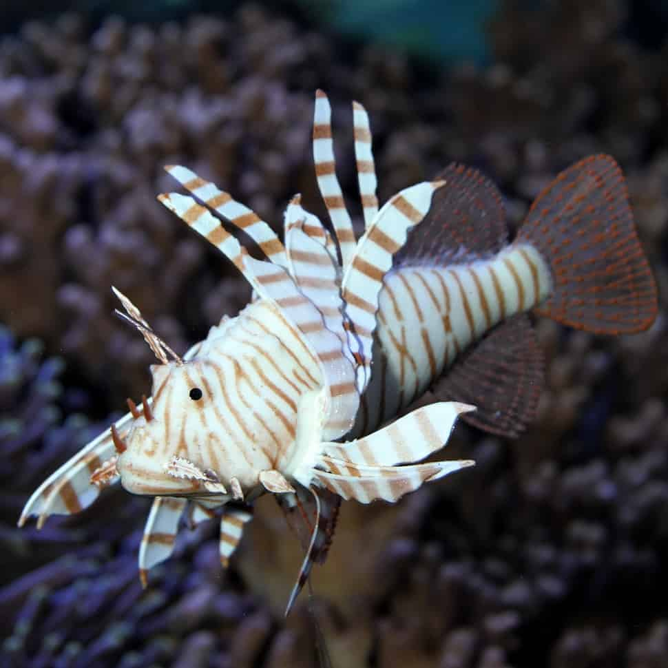Dekoration für dein Aquarium 26