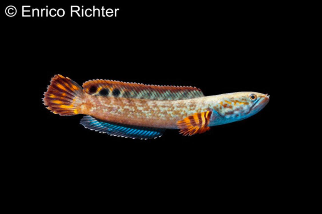 Verbreitungskarte und Fischentwicklung in der Erdgeschichte 56