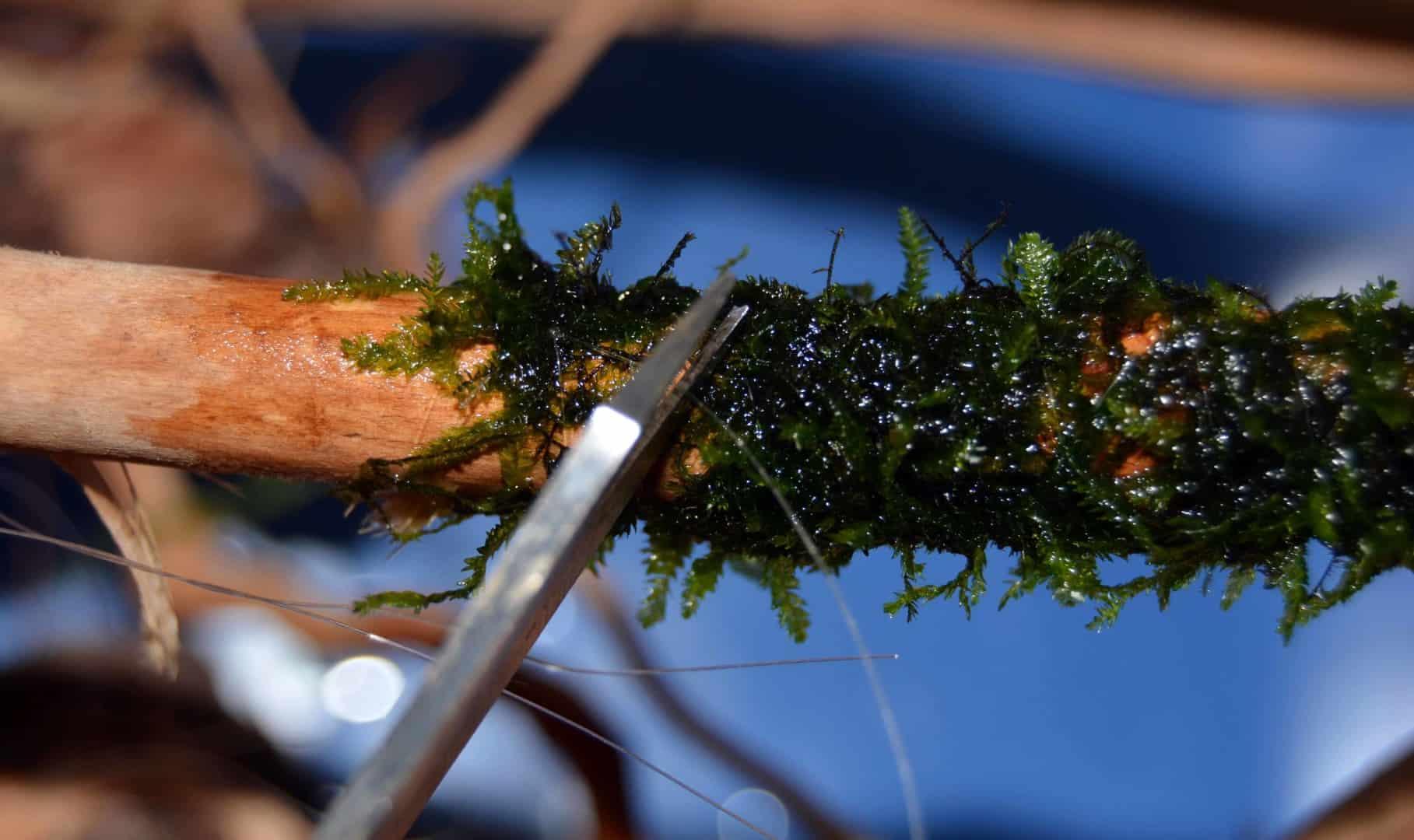 Moos und Aufsitzerpflanzen befestigen 14
