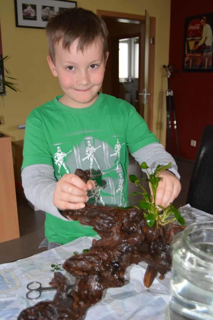 Moos und Aufsitzerpflanzen befestigen 9