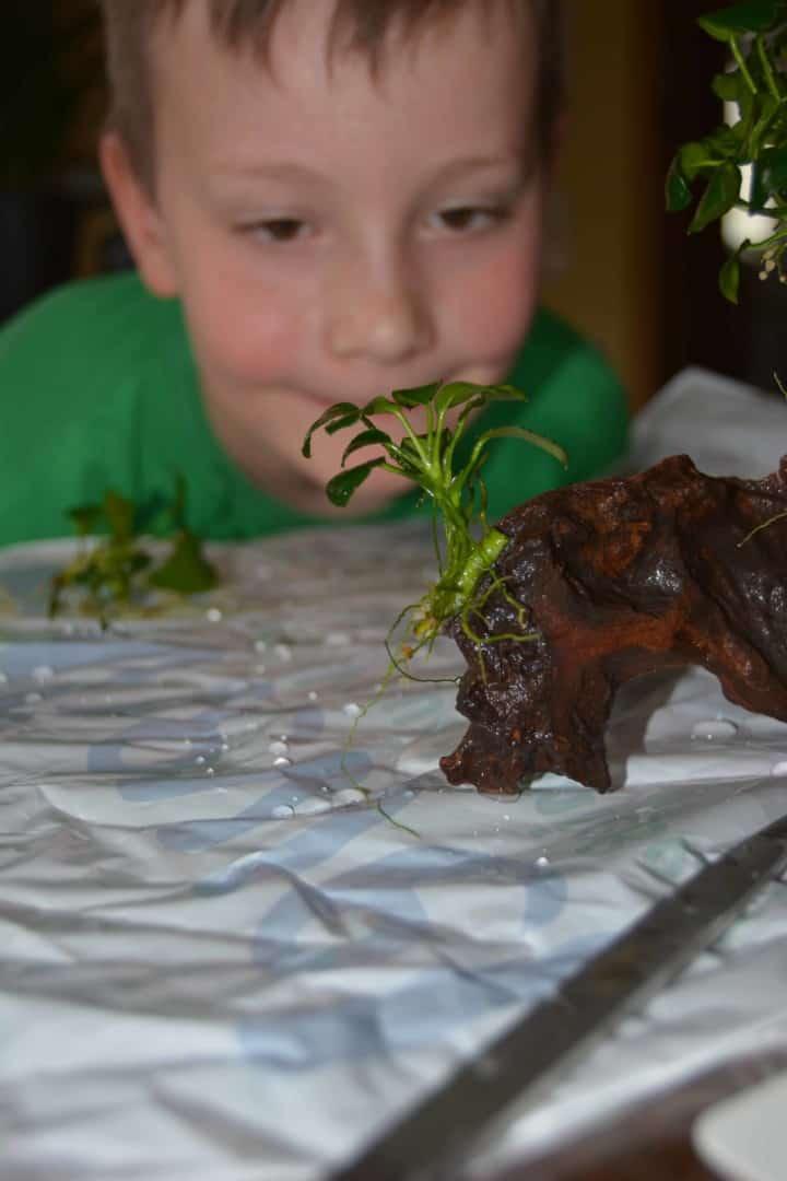 Moos und Aufsitzerpflanzen befestigen 10