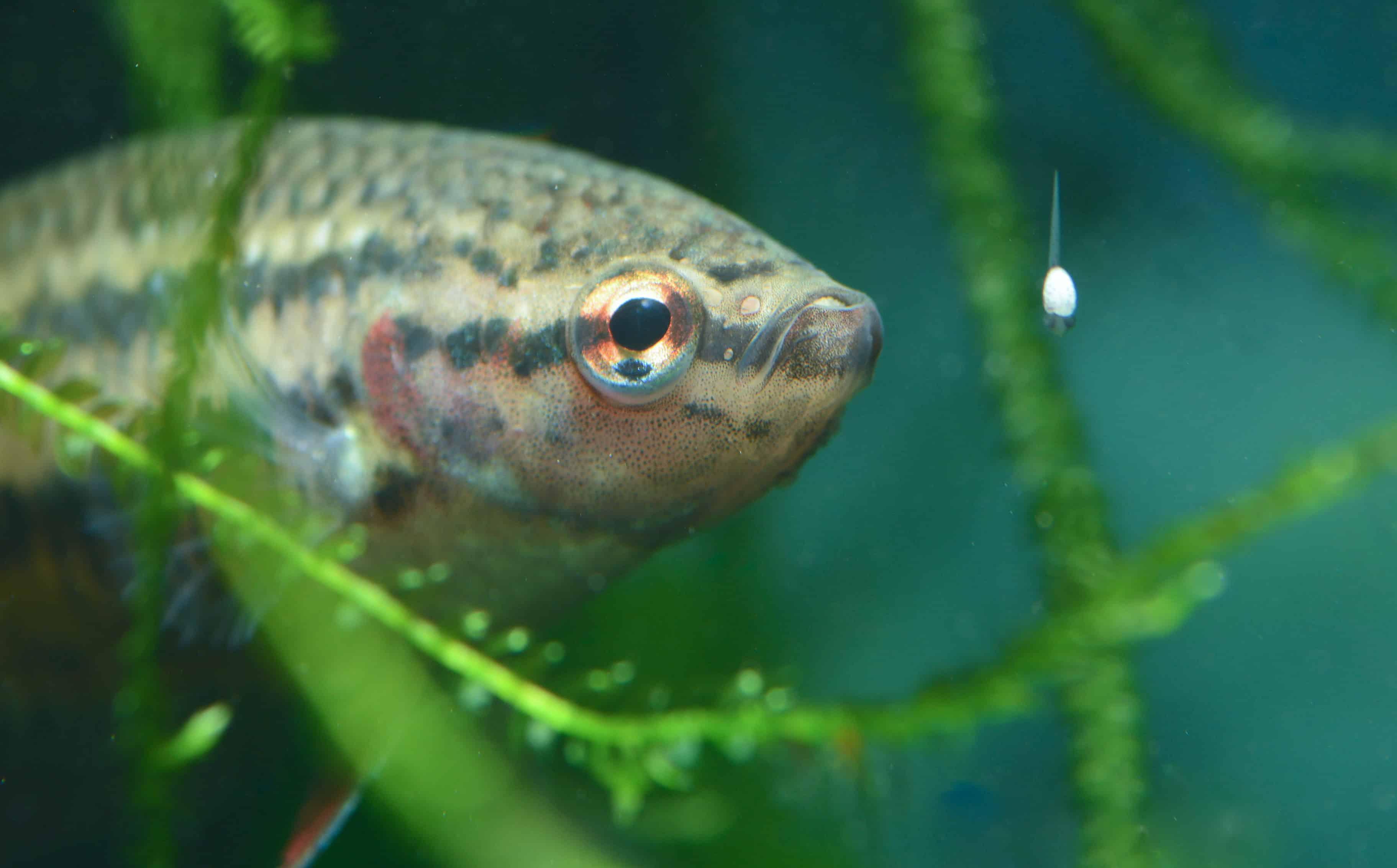Nachwuchs in sicht was ist zu tun my fish for Kleine zierfische