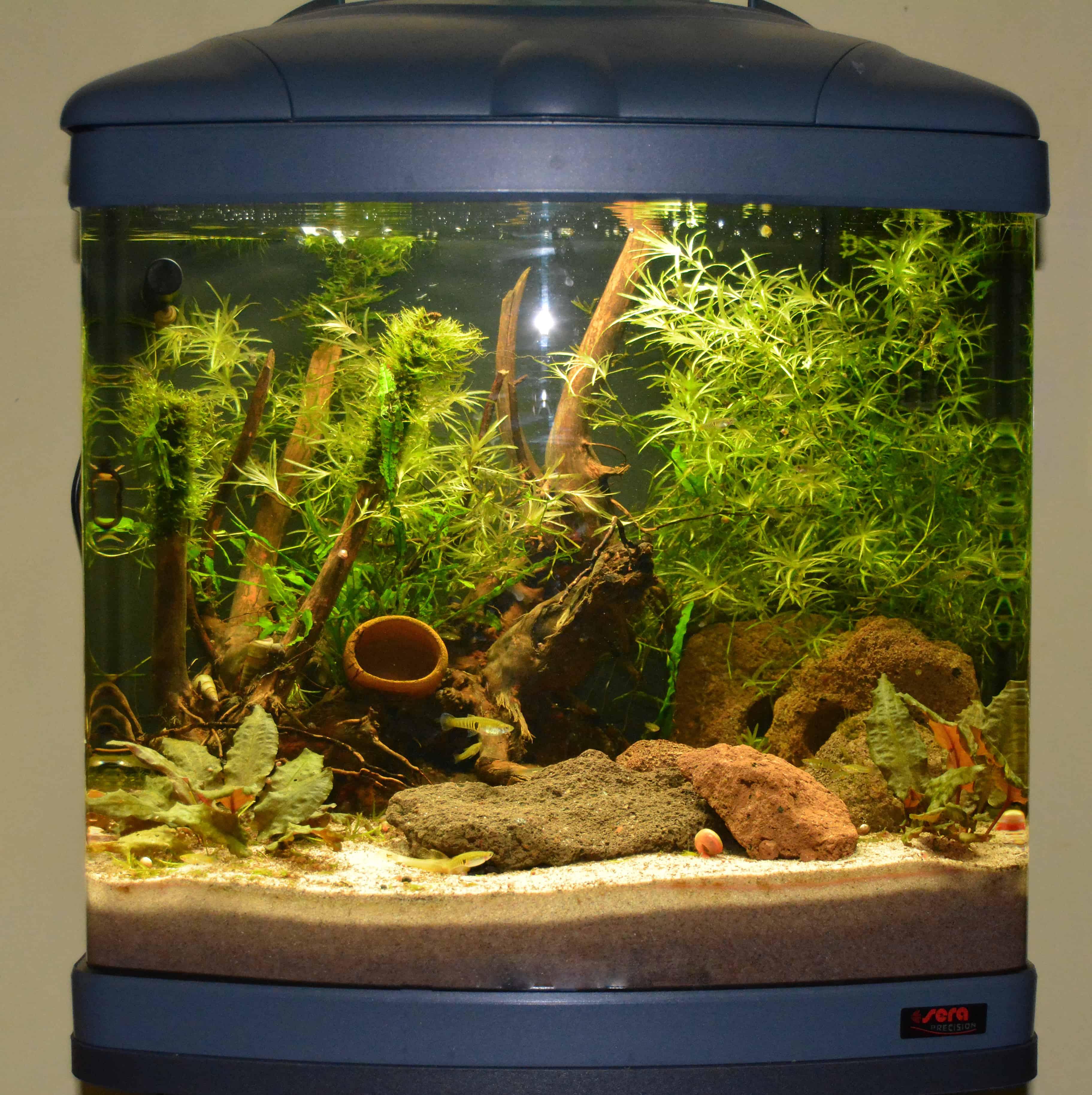 Erste Schritte zum eigenen Aquarium 3