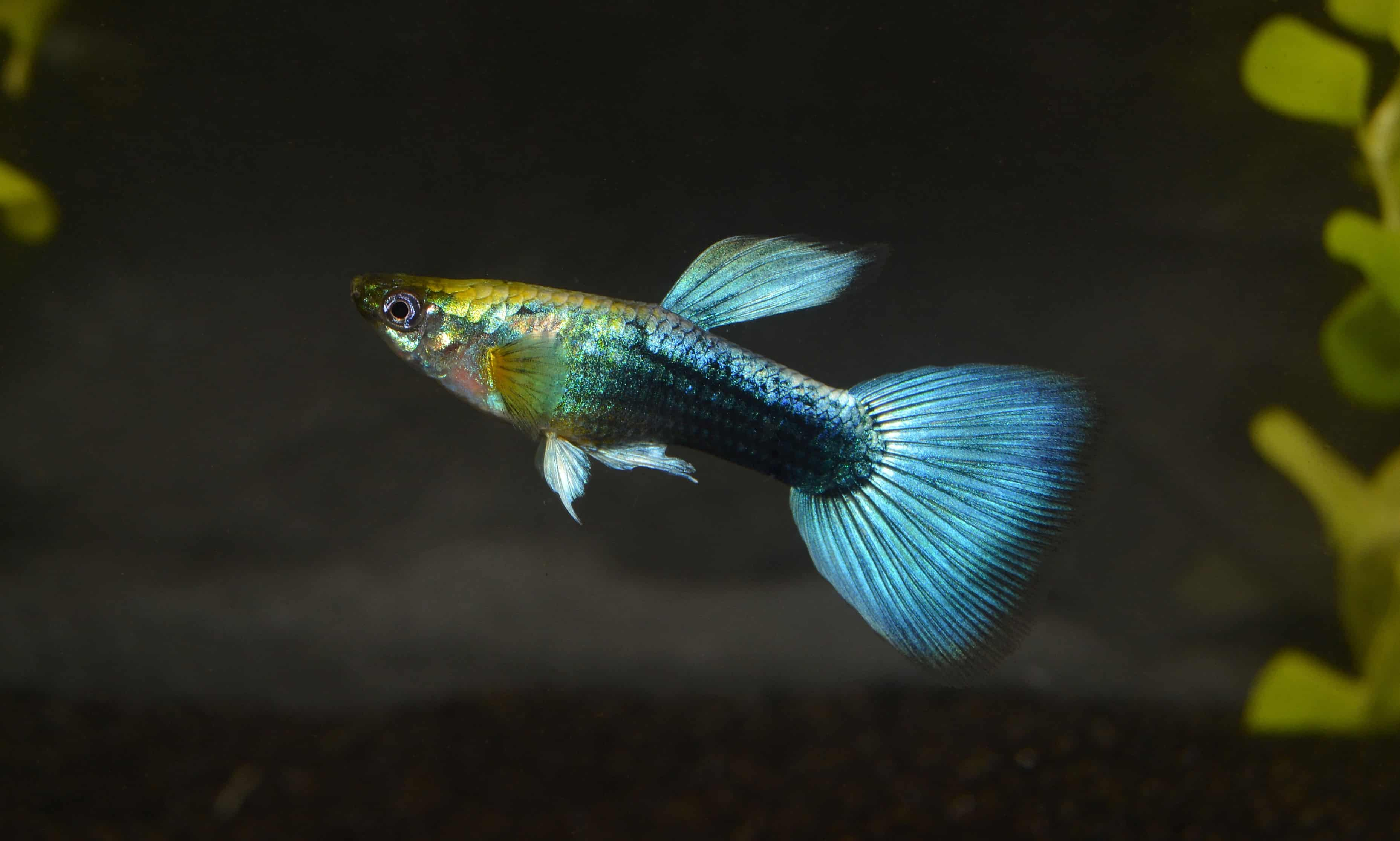 Die Bewohner deines Aquariums 2