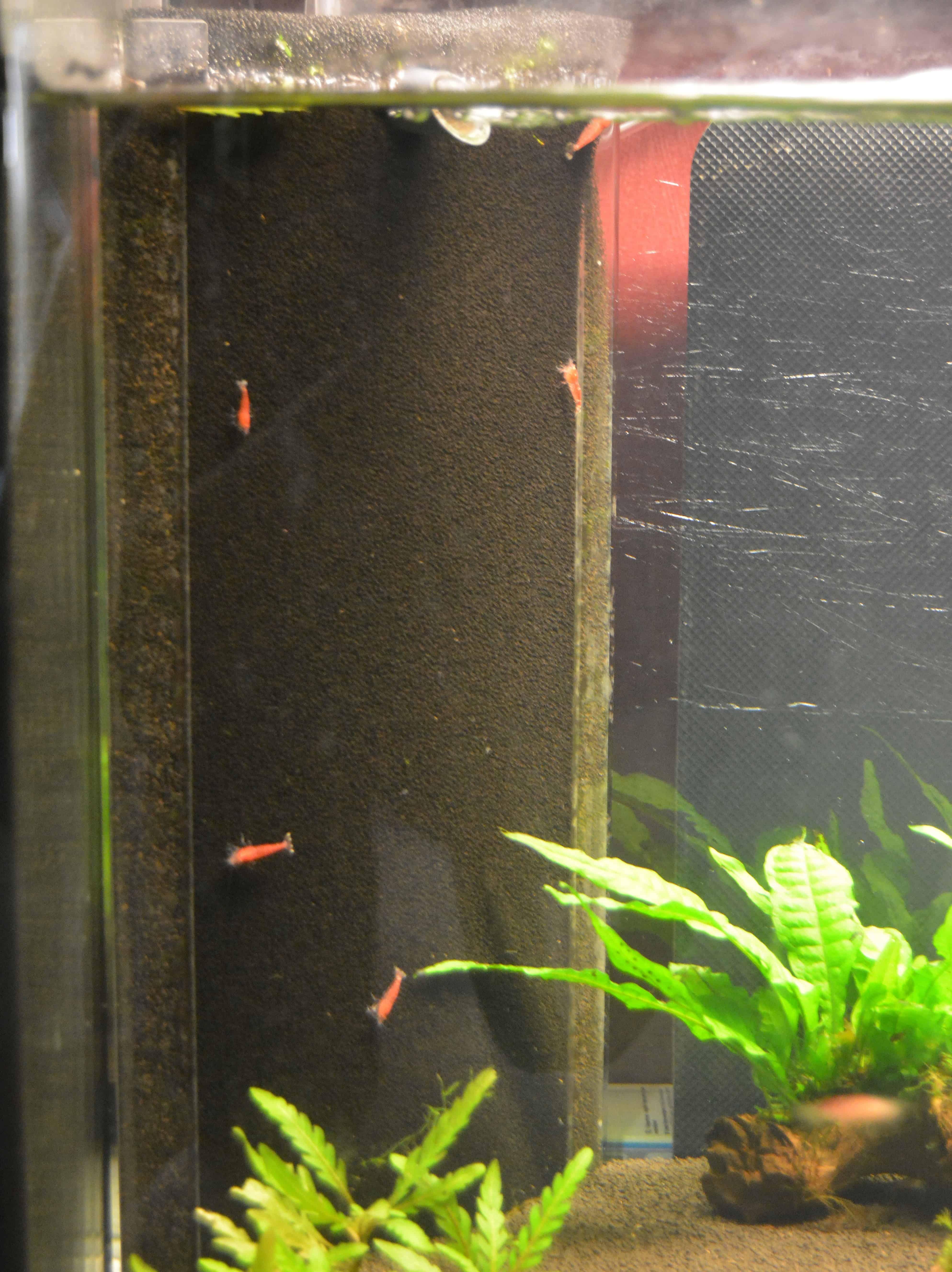 Sehr Filter: Dein Helferlein für sauberes Wasser - my-fish HA92