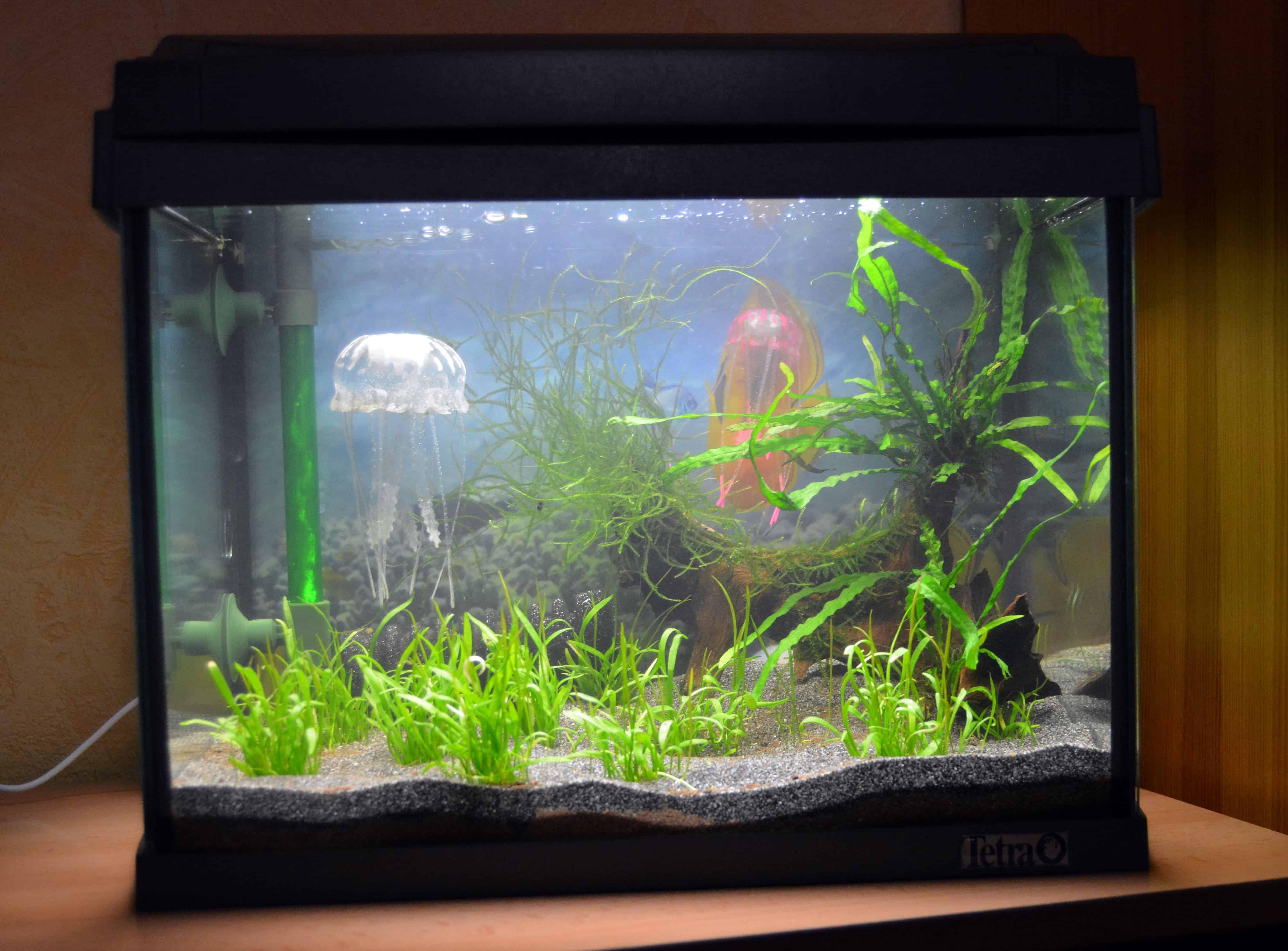 Erste Schritte zum eigenen Aquarium 5