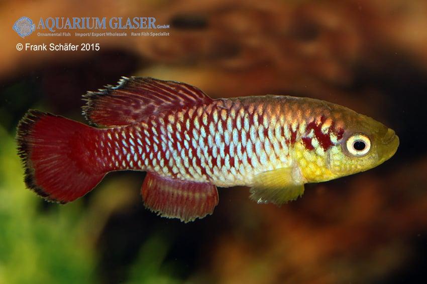 Verbreitungskarte und Fischentwicklung in der Erdgeschichte 29