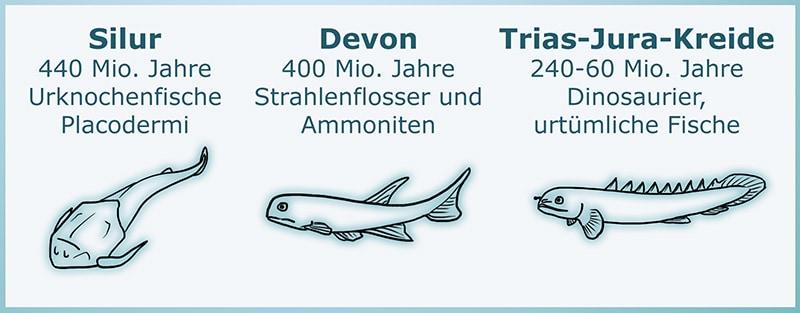Die frühen Formen der Fische