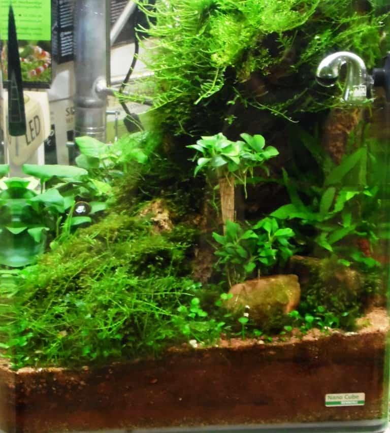 Bildnachweis: Messe Sindelfingen))Klein, aber fein: Auch in einem Mini-Aquarium kann man ein faszinierendes Aquascape einrichten.