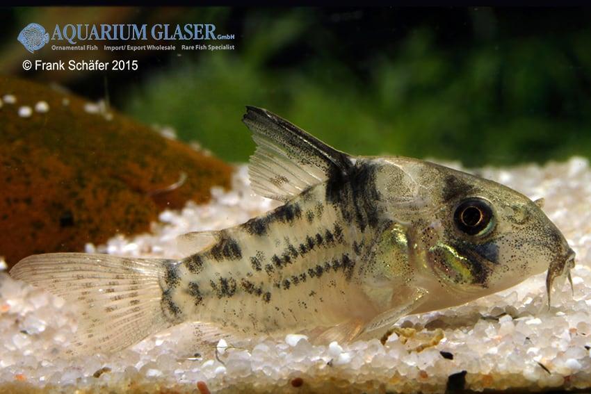 Verbreitungskarte und Fischentwicklung in der Erdgeschichte 21